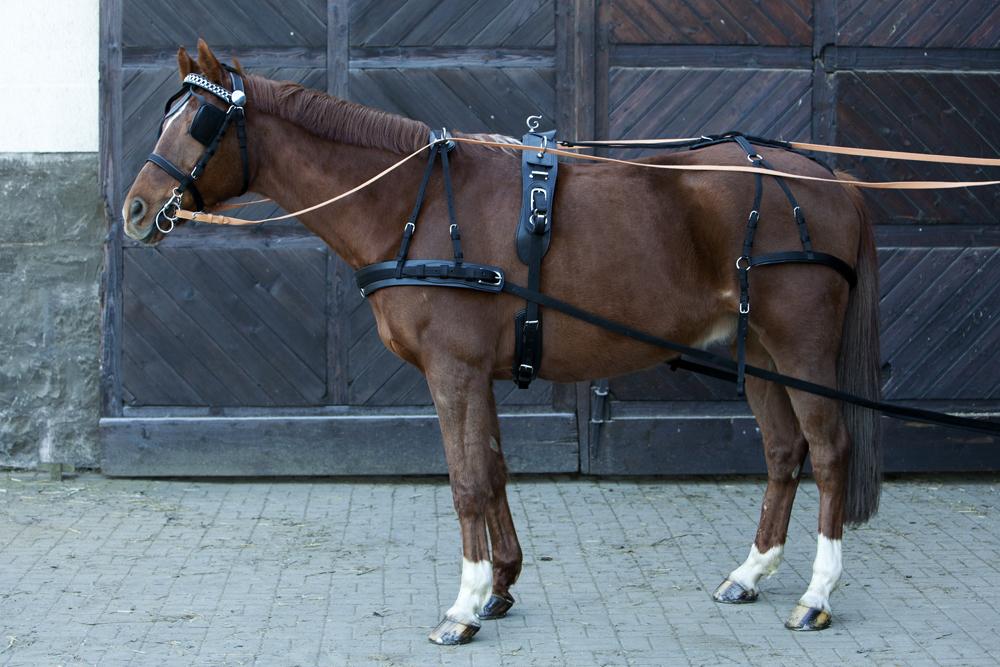 фото амуниции конной